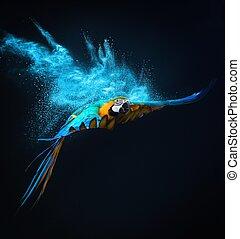 op, papegaai, ara, ontploffing, poeder, vliegen, kleurrijke