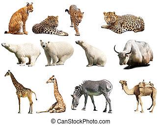 op, set, vrijstaand, witte , animals.