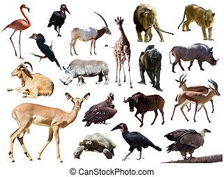 op, vrijstaand, afrikaan, animals., witte