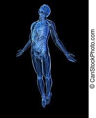 opblussende, x-ray, -, krop