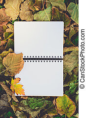 Open blank book on dry leaves in autumn. Reading, Nostalgic, Education and back to school concept.