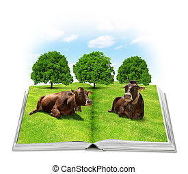 Open book with the cows in a meadow