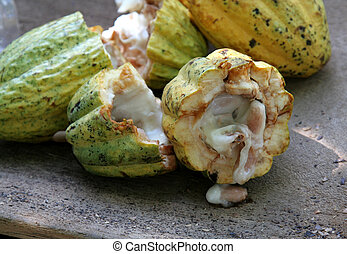 Open Cocoa Pod - Cracked open cocoa fruit pods sitting a...
