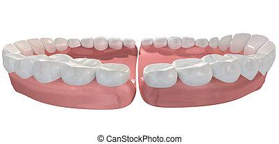 Open False Human Teeth Extreme Closeup - An extreme closeup ...
