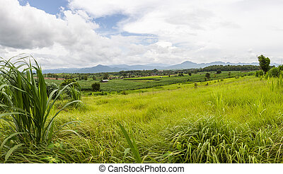 Open field in Thailand