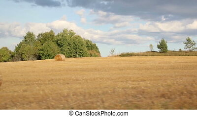 Open field of haystacks hay and cows - An open field where...