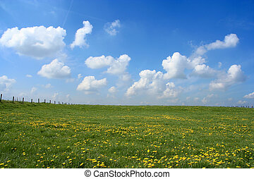 Open field - Scenic picture of a meadow full of dandelions ...