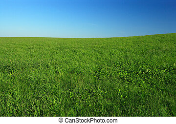 Open field - Wide open green grass field with clear blue...