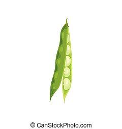 Open green bean pod. Vector illustration on white background.