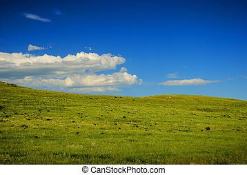 An open green pasture with blue skies.