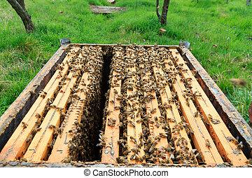 Open hive, beekeeping - Open hive detail. Beekeeping,...
