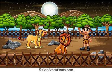 open, man, kooi, zookeeper, nacht, leeuwen, lucht