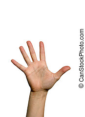 Open palm hand - The five fingers of a open palm hand