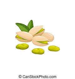 Open pistachio nut in hard shell isolated pistache