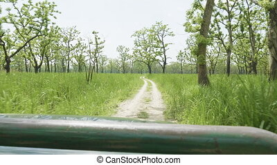 Open roof jeep safari in rainforest, Chitwan national park,...