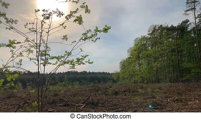 Open space in the forest - A scenic view of an open space in...