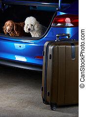 Open trunk of car