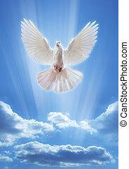 open, vleugels, duif, breed, lucht