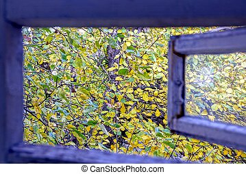 Open wooden window into the yard with branches and yellow green leaves