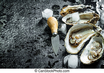 Opened raw oysters with ice cubes and knife.