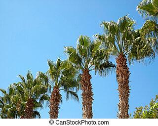 opgespoorde, palm, diagonaal, bomen