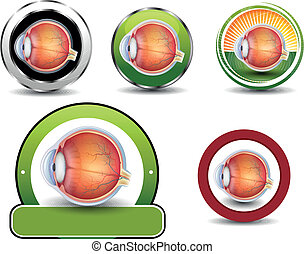 Ophthalmology symbols collection, Human eye cross section.