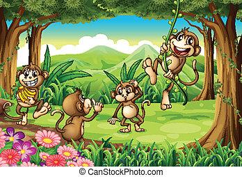 opicí, hraní