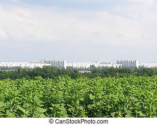 opinión de la ciudad, verde, kharkiv, campo