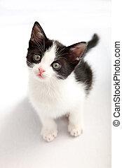 opkijken, fototoestel, black , katje, witte , kleine