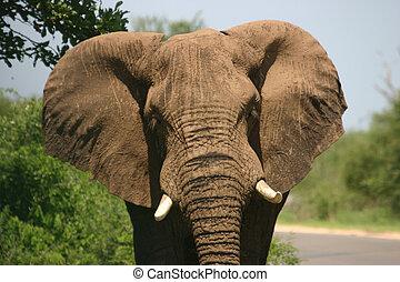 opladen, elefant