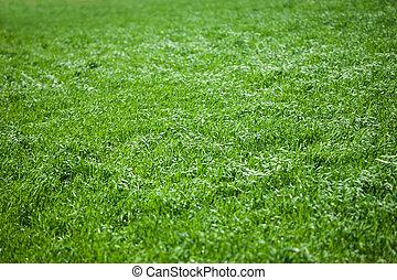 oppe, frisk, græs, lukke, forår
