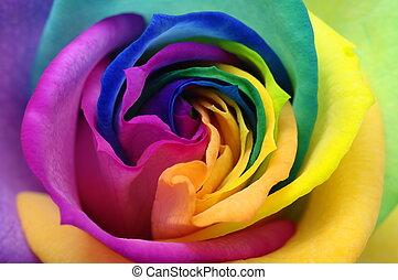 oppe, hjerte, rose, lukke, regnbue