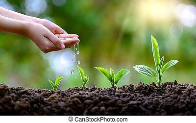 opslag, handen, groeiende, bokeh, boompje, vasthouden, vrouwelijke hand, achtergrond, akker, bomen, natuur, gras, bos, concept, groene, seedlings.