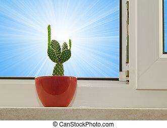opuntia cactus on sunlight background