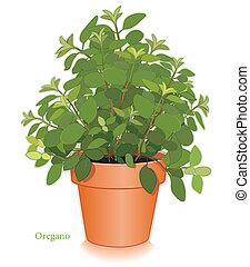 orégano italiano, erva, em, flowerpot