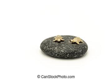 or, séance, pierre, tortues, petit, mer, noir, fait, deux