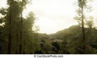 orage, brouillard, arbres, accidenté, flanc montagne, venir...