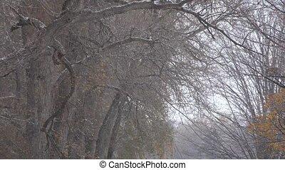 orage, forêt, arbres, neige