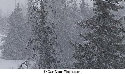 orage, sombre, forêt, tempête neige, neige