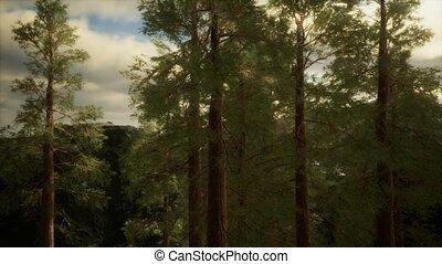 orage, venir, flanc montagne, accidenté, arbres, pin, ...