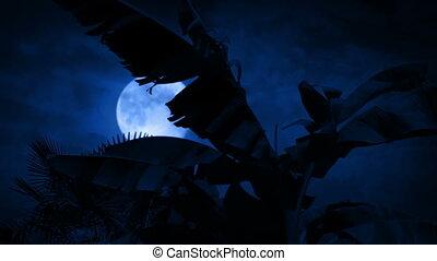 orageux, arbre, lune, derrière, temps, paume