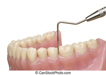 oral hygiene - measurement of the gingival sulcus