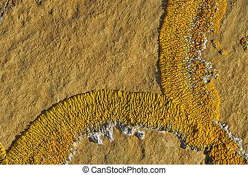 Orance lichen on boulder