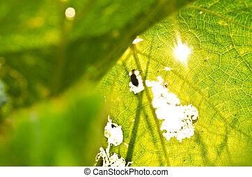 orang beetle eat leaf and sunlight