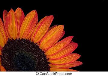 orange, éclater