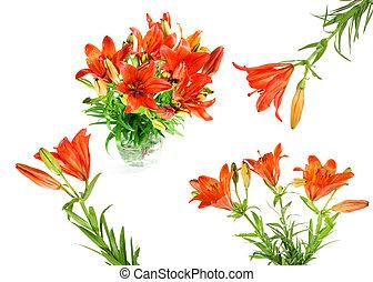 orange, été, lilly., ensemble, fleurs
