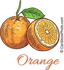 orange, agrumes, isolé, icône, croquis