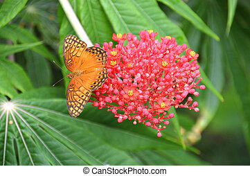 Orange and black butterfly on a pink flower - Photo of an...