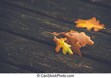 Orange and brown maple leaves