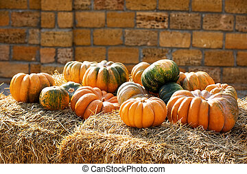 Orange and green pumpkins at outdoor farmer market. Colorful autumn Thanksgiving background.